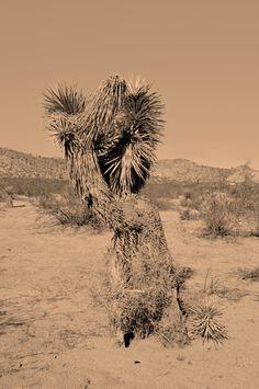 _CA+ __california ___joshua tree park PHOTOGRAPHIE © [ catrin mackowski ]