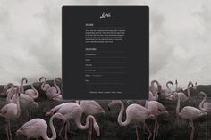 3.jpg (JPEG Image, 920x615 pixels) #flamingo #pink #website #graphics #grey