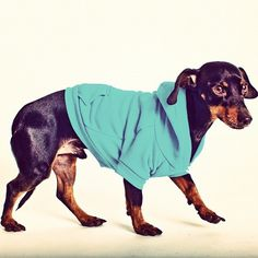 Blog 1855 | By Renata Fraga #clothes #canine #photography #cute #animal #pet #dog