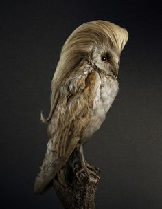 Photography Idea Birds With Hair Styles by Souverein #photo #retouching #birds #haircut #photography #manipulation