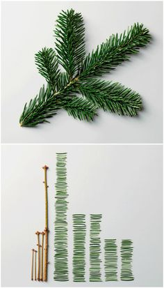 Pine Leaves by Ursus Wehrli #infographics #photo #wehrli #datavis #ursus #science #funny