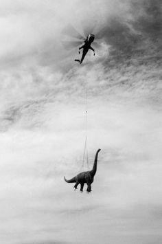 Swiss Cheese and Bullets / Wisdom #helicopter #dinosaur #photography