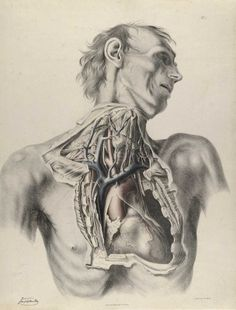 quain_p02.jpg 1200×1575 pixels #drawing #anatomy