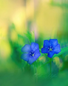 #flora_addict: Magical Flowers Photography by Eileen Hafke