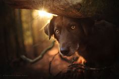 Photographer Captures Soulful Portraits Of Dogs In Austrian Wilderness  #dog #animals #photography #portrait