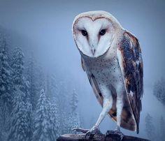 Birds of Prey: Fine Art Photography by Zack Seckler