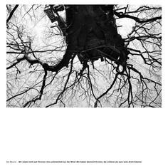 Die Bäume Wir sitzen nicht auf Thronen. Uns schmeichelt nur der Wind. Wir haben dennoch Kronen, die schöner als eure sind. Erich Kästner #hambacherforst #forest #treehouse PHOTOGRAPHIE © [ catrin mackowski ]