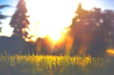 Post your images easily to multiple social networks and blogs with Polarfox app for Android. Become a beta tester! http://www.polarfox.com #inspiration #grass #photo #sunshine #yellow #warm