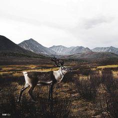 Deer in the headlight. #Sample - Be inspired by Rawpixel.com #nature #spring #deer #animal #realimage #social #branding #socialmedia #sal