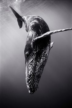 whale sea ocean water photo fish