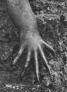 WILD THING: Shell Blues #white #black #photography #reptile #animal #and #claw #hand #lizard #beauty