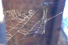 WEB #photo #spider #digital #photography #web