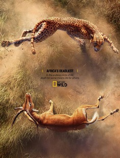 Africa's Deadliest – Cheetah X Impala