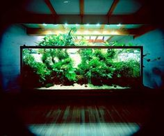 Fancy - Nature Aquarium by Takashi Amano #amano #aquarium #nature #takashi