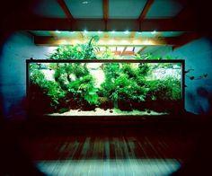 Fancy - Nature Aquarium by Takashi Amano #amano #aquarium #nature #takashi