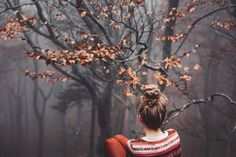 #forest #autumn #photo