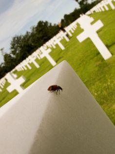 Evan Wakelin's drawings and stuff #ladybug #cross #cemetary #normandy #ladybird