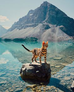 Meet Suki, The Adventure Wondercat Who Became an Instagram Star