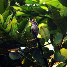 | tótem de neférland | #bird #fairytale #green #nature #totem #tree