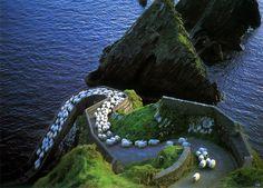 sheep-herds-around-the-world-1 #photo