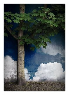 Tree by ~lassekorsgaard on deviantART #clouds #concrete #tree #sky