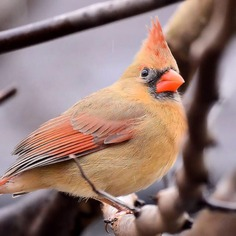 #nuts_about_birds: Beautiful Birds Photography by Shelia Rudesill