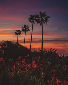 Dreamlike Landscapes of San Diego by Alec Basanec