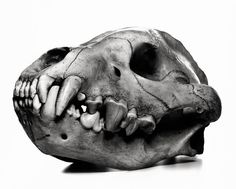 Cranium Architecture sees Irving Penn create a beautiful, absorbing study of animal skulls from the collection of the Narodni National Museu