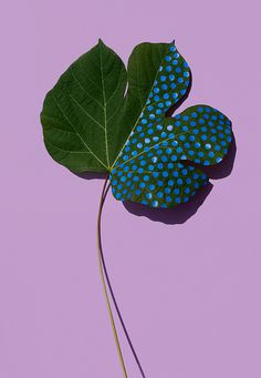 Foglia #nature #leaf #plants