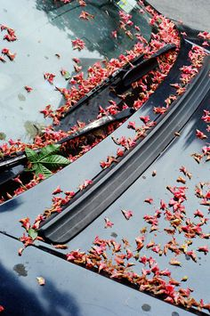 marionberrin 05 #fall #window #hood #car #leaves