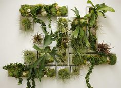 #livingwall #plants