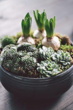 image #planting #composition #pot