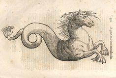 000366 #naturalism #aldrovandi #illustration #latin #ulisse #monster #drawing