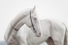 white horse #horse #white #photography #nature #animal