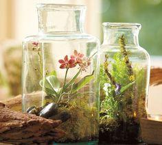 TERRARIUM_CENTREPIECE2 #plants #flowers