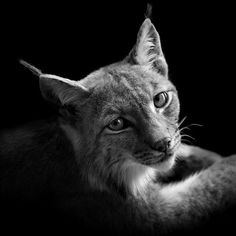 BW Animals Portraits by Lukas Holas #inspiration #photography #art #fine