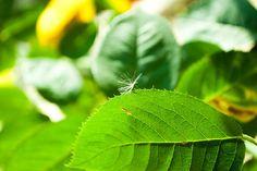 IG092 #leaf #rose #close #nature #up #green