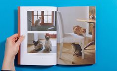 4 #inspiration #design #cat #people