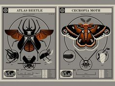 Beetle & Moth Poster #moth #animal #drawing #illustration