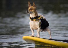 EzyDog Micro Doggy Flotation Device #tech #flow #gadget #gift #ideas #cool