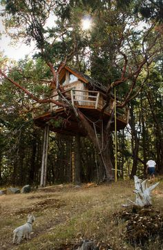 Treehouse On Henry Island #treehouse