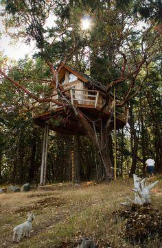 Treehouse On Henry Island