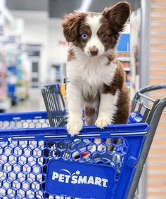 Most Dog Friendly Stores in America - PetSmart