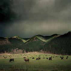 Vintage American Landscapes by Michael Eastman