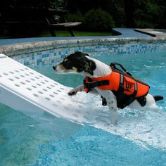 Skamper Pet Pool Escape Ramp #tech #flow #gadget #gift #ideas #cool