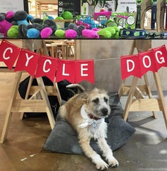 Most Dog Friendly Stores in America - Urban Outfitters