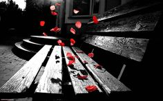 Romantic Color Splash #inspiration #romantic #photography