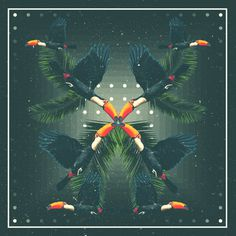 toucan #album #palms #tropical #design #graphic #paradise #art #collage #toucan
