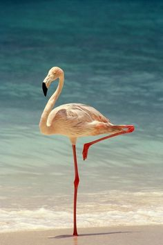 Photography #birds #flamingo