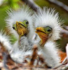 tumblr_lpwk75od041qa9omho1_500.jpg (JPEG-Grafik, 500x515 Pixel) #birds